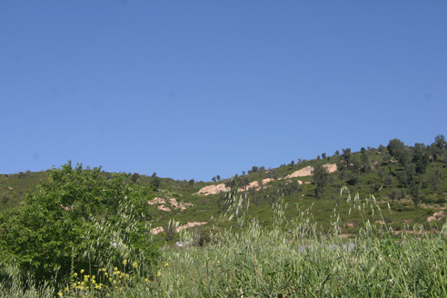 MDM, peach tree and sky and slope