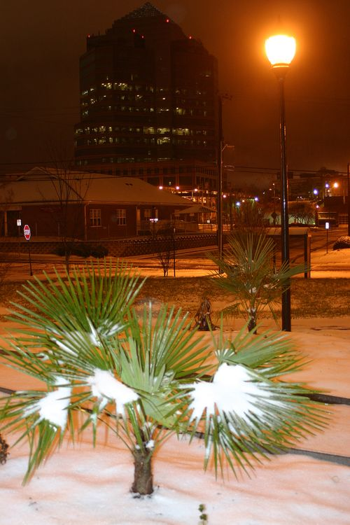 Snow , palm, city