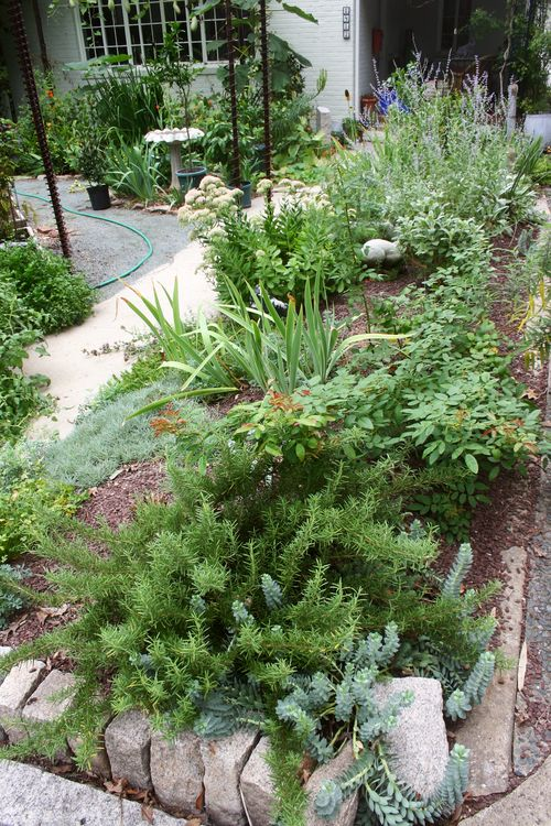 Herb bed from street